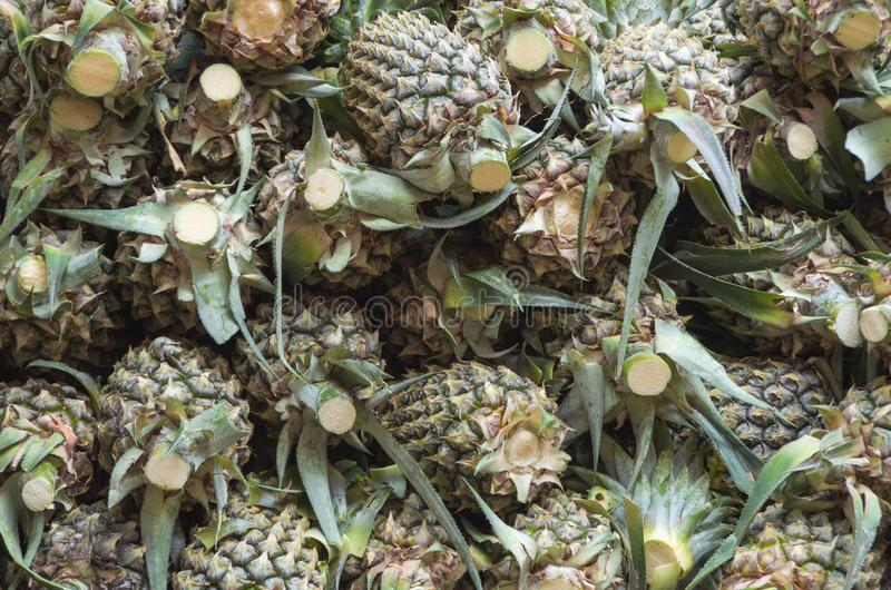 Ananas or pineapple fruit royalty free stock photo