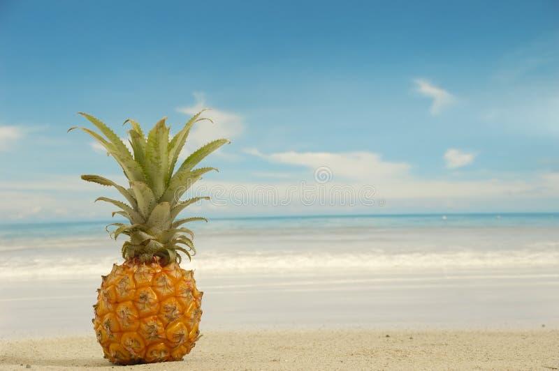 Ananas sulla spiaggia esotica fotografia stock