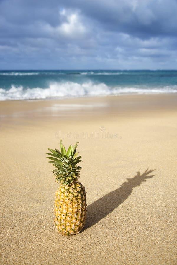 Ananas sulla spiaggia tropicale. fotografie stock libere da diritti