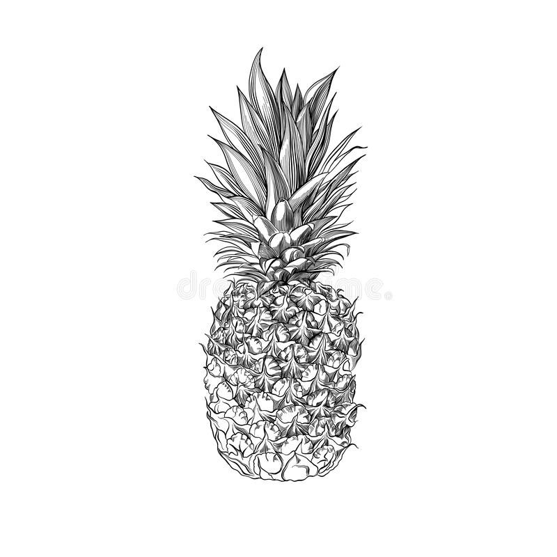 Ananas tiré par la main de vecteur Illustration de style gravée par fruit tropical d'été illustration de vecteur