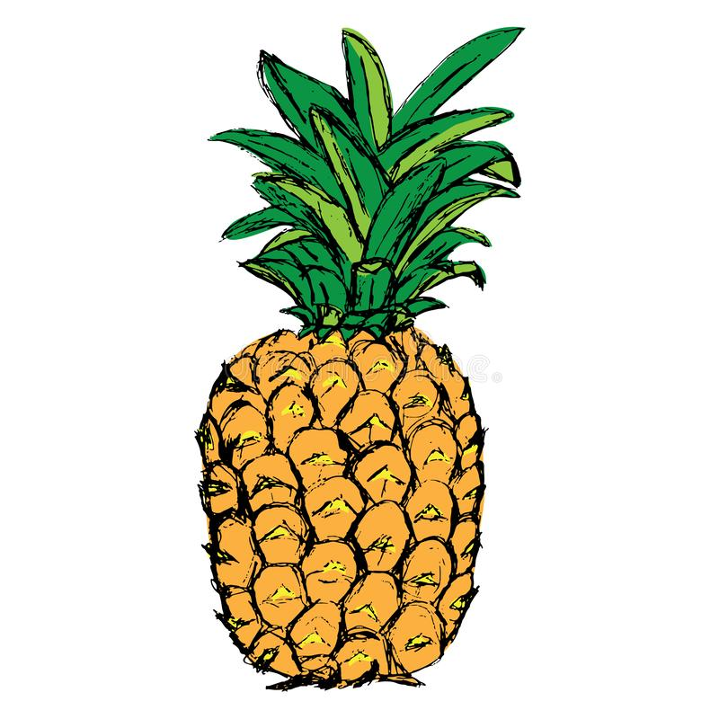 ananas tropisk exotisk frukt skissa royaltyfri illustrationer