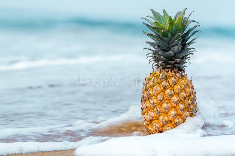 Ananas w wodzie zdjęcia royalty free