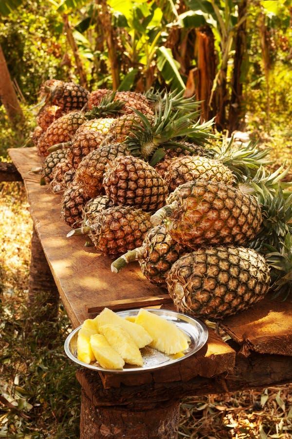 Ananasa gospodarstwo rolne, Nungwi Zanzibar fotografia royalty free