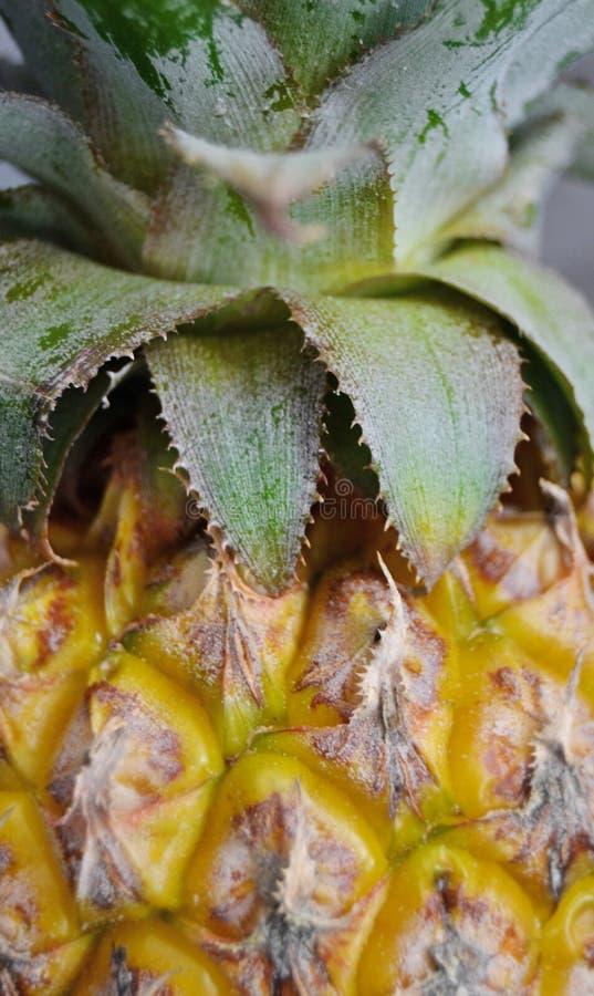 Ananascloseup från sidan royaltyfria bilder