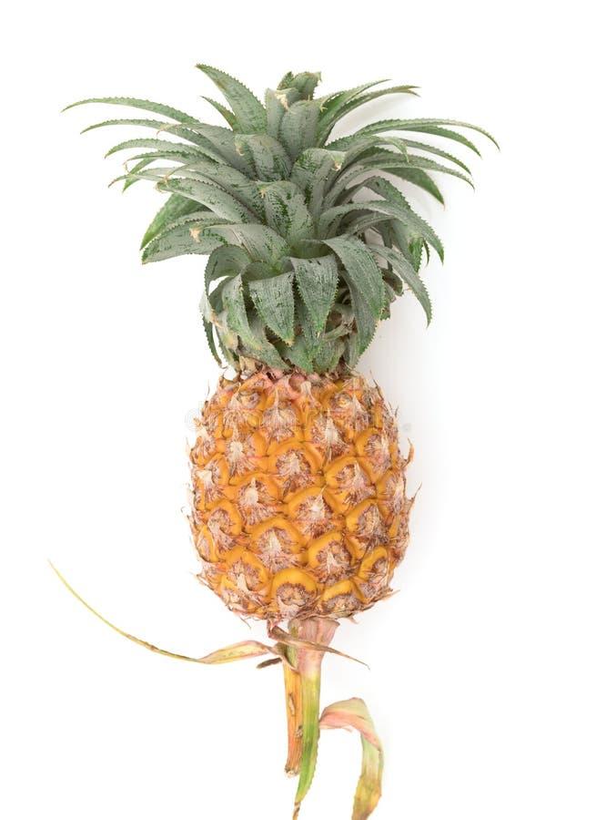 Ananasfrucht reif auf Weiß lizenzfreie stockbilder