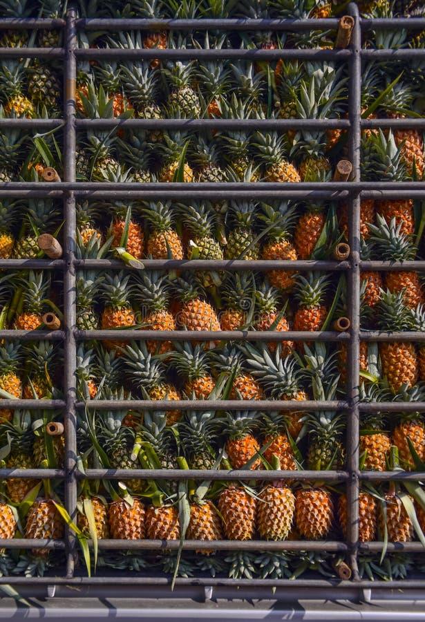 Ananasowa owoc na ciężarówce, Zbiera tropikalną owoc zdjęcie royalty free