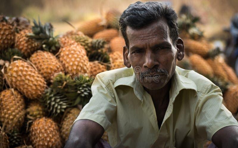 Ananasplockning i kerala royaltyfri foto