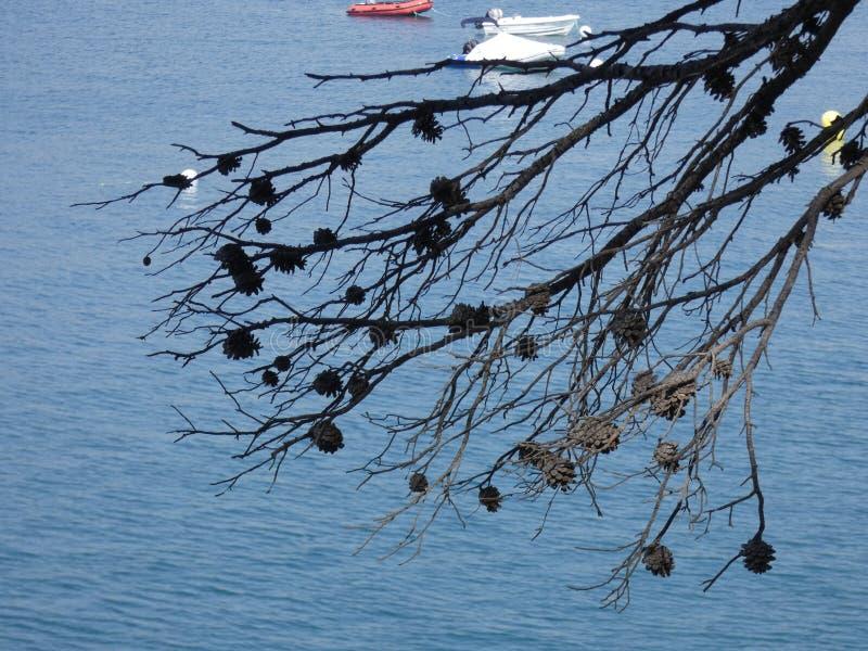 Ananassen droog op het blauwe overzees royalty-vrije stock afbeelding
