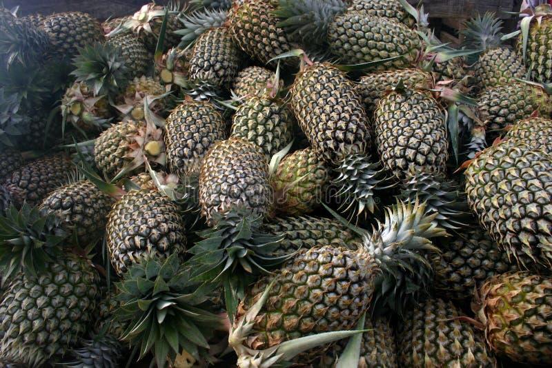 Ananassen in Fiji stock afbeeldingen