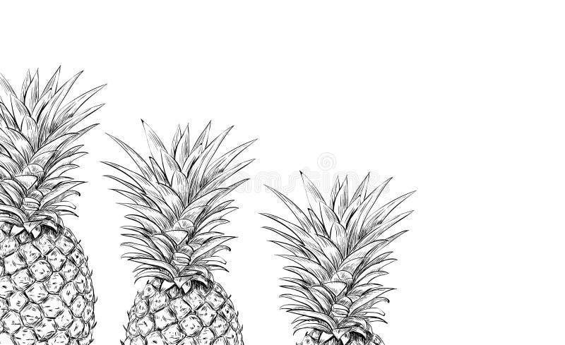 Ananassen op een witte achtergrond voor druk vector illustratie