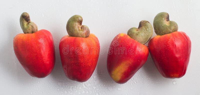 Anarcadiers ou fruit de Caju photos libres de droits
