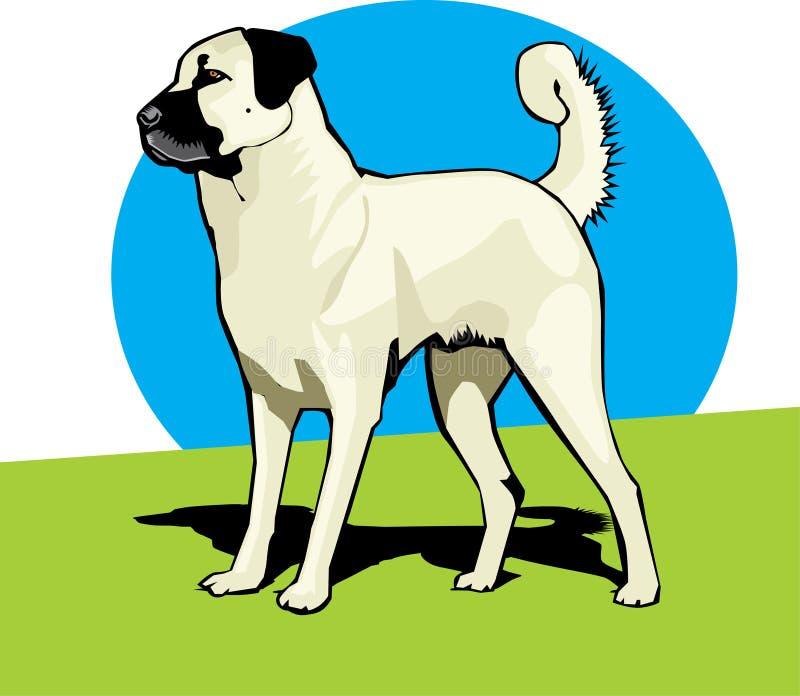 anatolian sheperd собаки цвета