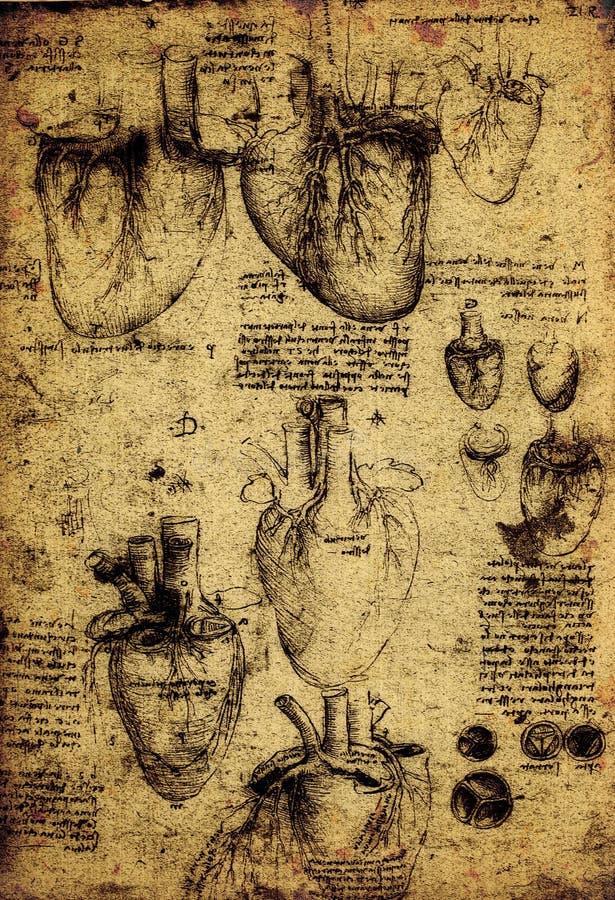 Anatomía libre illustration
