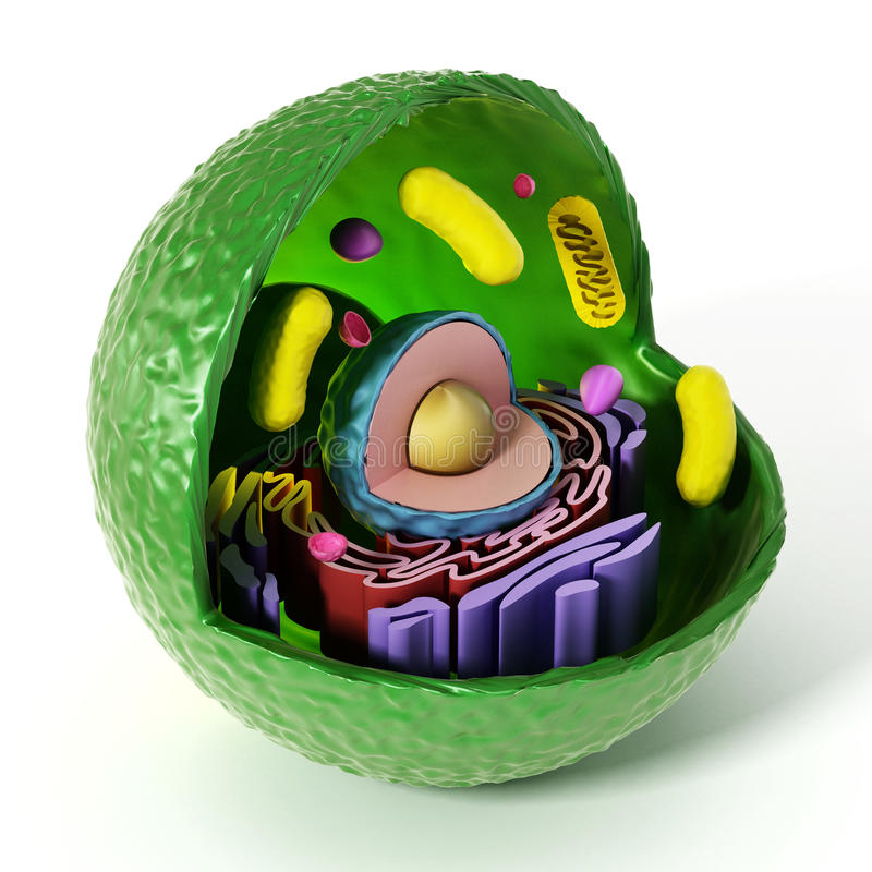 Anatomía animal de la célula aislada en el fondo blanco ilustración 3D ilustración del vector