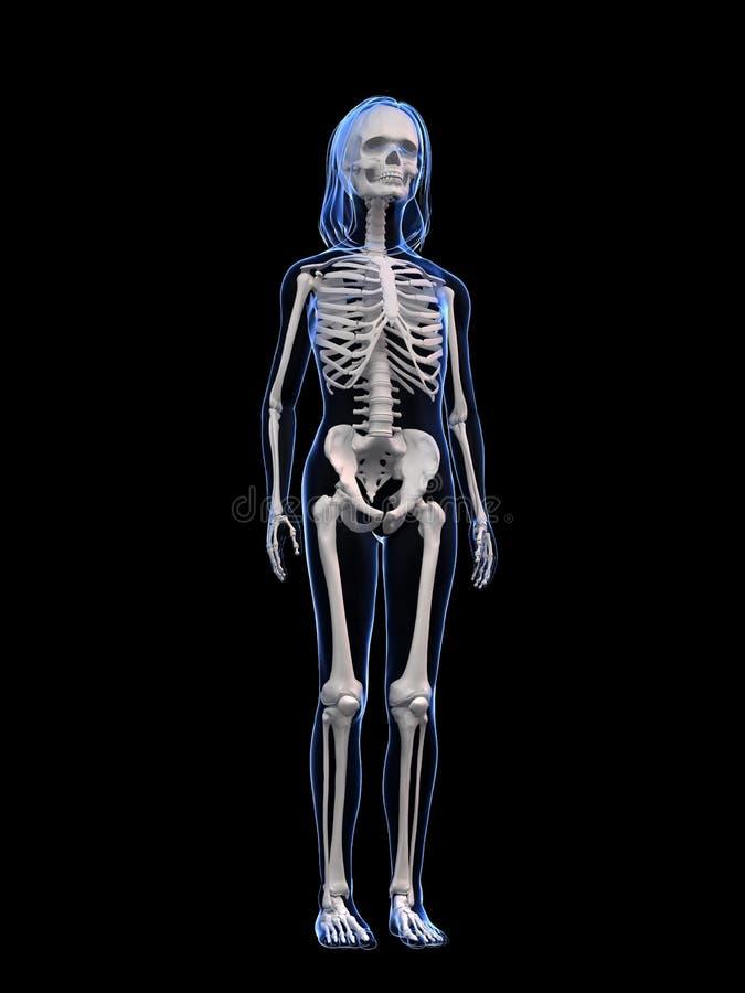 Magnífico Anatomía Carrocería Friso - Imágenes de Anatomía Humana ...