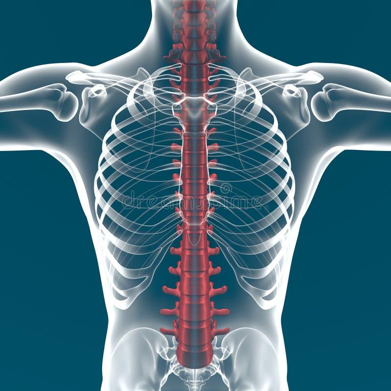 Dorable Anatomía Programa De Mbbs 1er Año Galería - Imágenes de ...