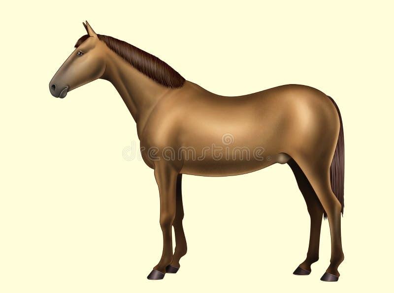 Anatomía del caballo - partes del cuerpo - ningún texto libre illustration