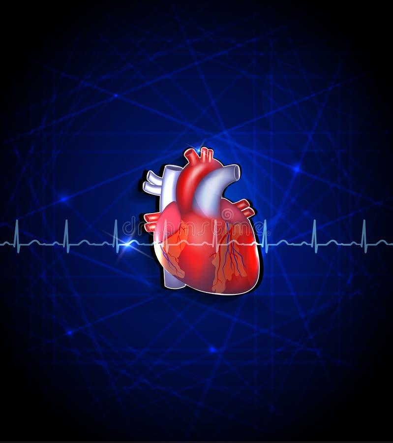 Anatomía Del Corazón En Un Fondo Azul Profundo Ilustración del ...