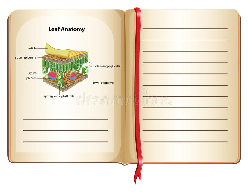 Anatomía Del Cuaderno Y De La Hoja En La Página Ilustración del ...