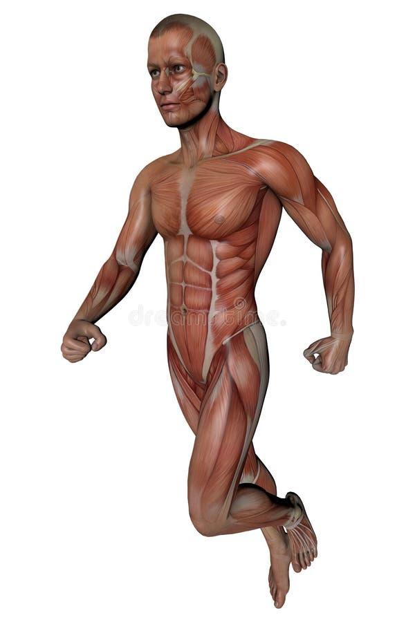 Bonito Anatomía De La Aptitud Imágenes - Imágenes de Anatomía Humana ...