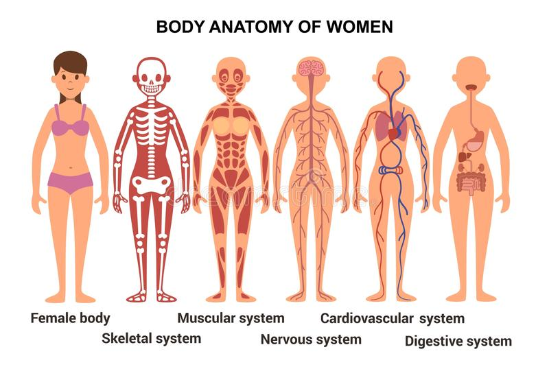 Famoso Cartel De La Anatomía Femenina Fotos - Anatomía de Las ...