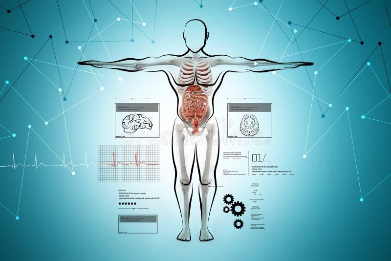 Anatomía del cuerpo humano stock de ilustración. Ilustración de ...