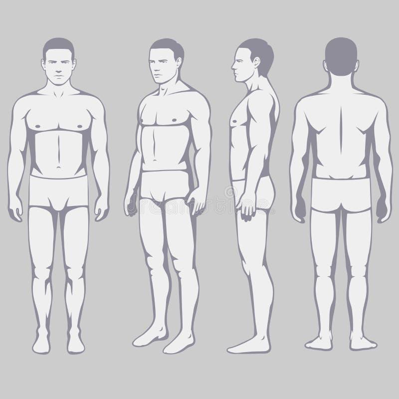 anatomía del cuerpo, lado trasero del frente del hombre del vector libre illustration