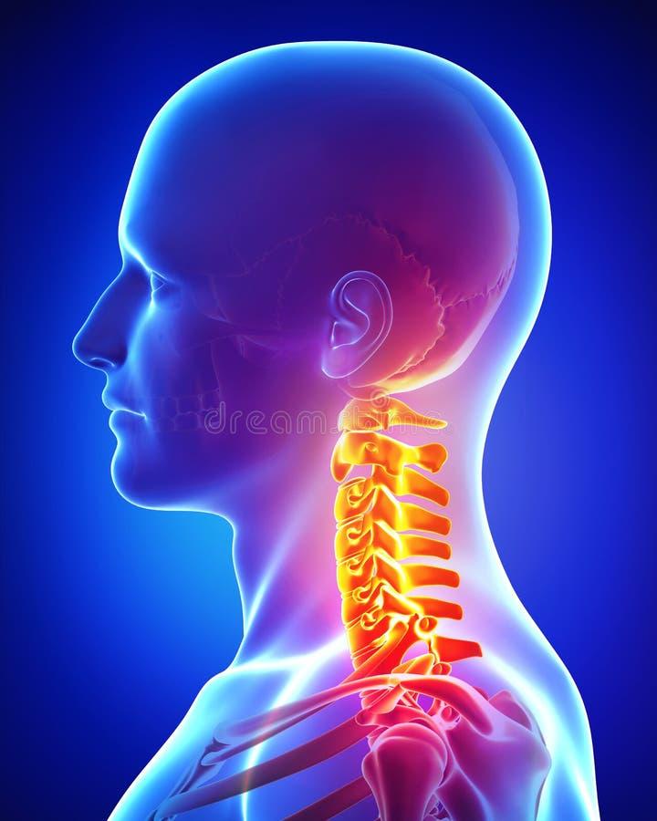 Anatomía del dolor en el cuello de la hembra stock de ilustración