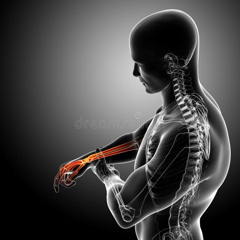 Anatomía del dolor masculino de la muñeca ilustración del vector