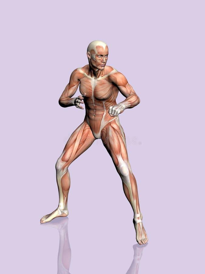 Download Anatomía del hombre. stock de ilustración. Ilustración de fondo - 190203