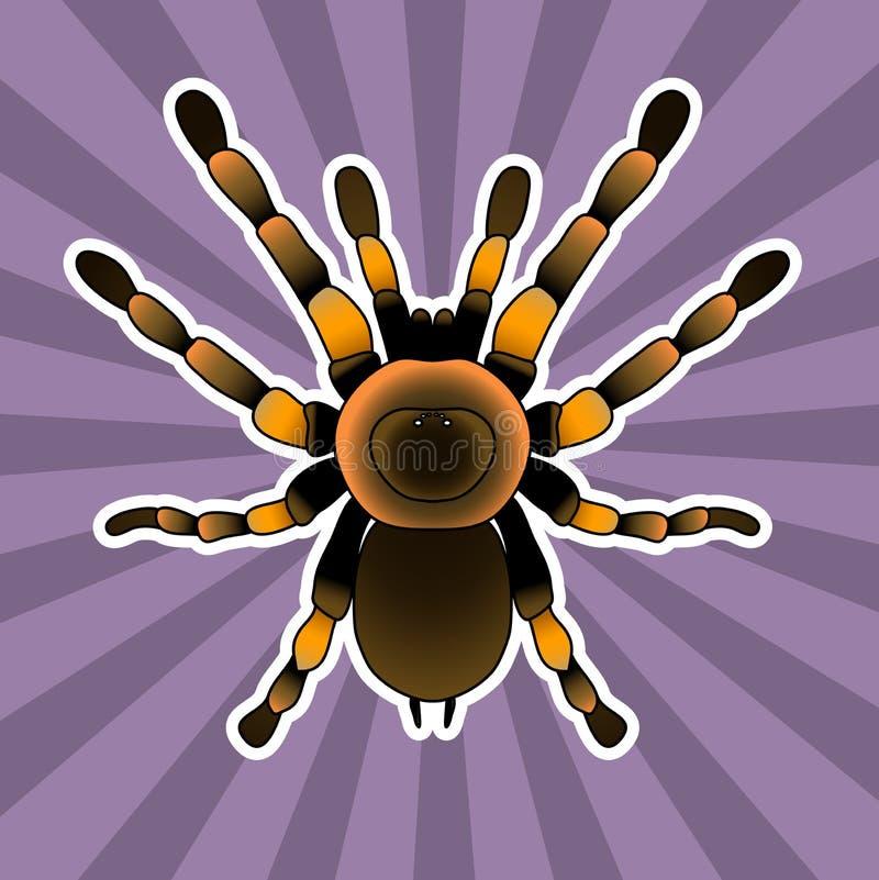 Anatomía Del Insecto Araña De La Tarántula Smithi De Brachypelma ...