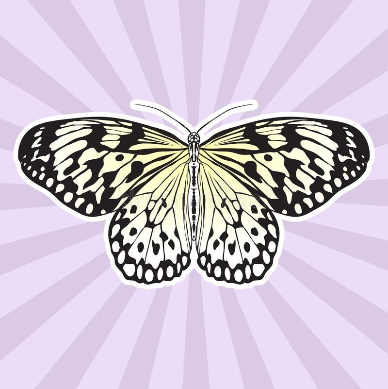 Anatomía Del Insecto Idea Leuconoe De La Mariposa De La Etiqueta ...
