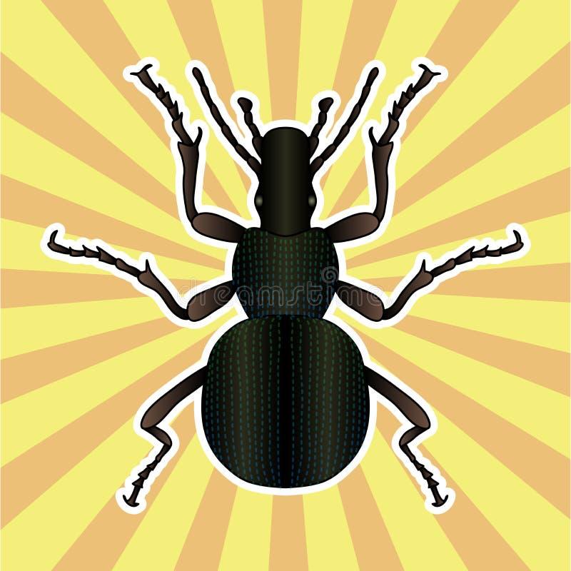 Famoso Anatomía De Un Insecto De La Píldora Imágenes - Imágenes de ...