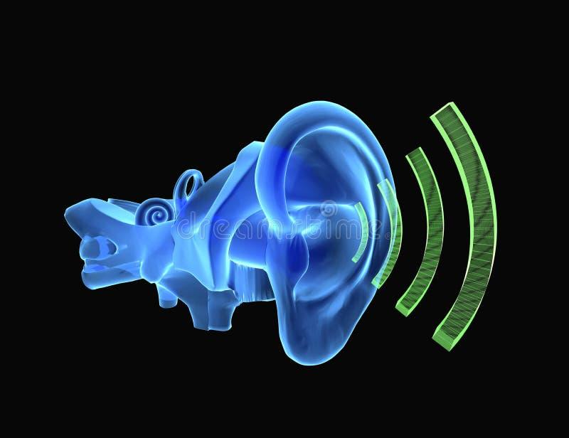 Anatomía Del Oído 3D Con El Sonido Stock de ilustración ...