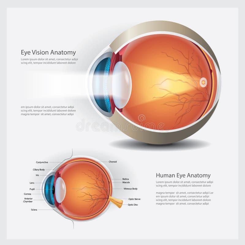 Anatomía del ojo humano stock de ilustración