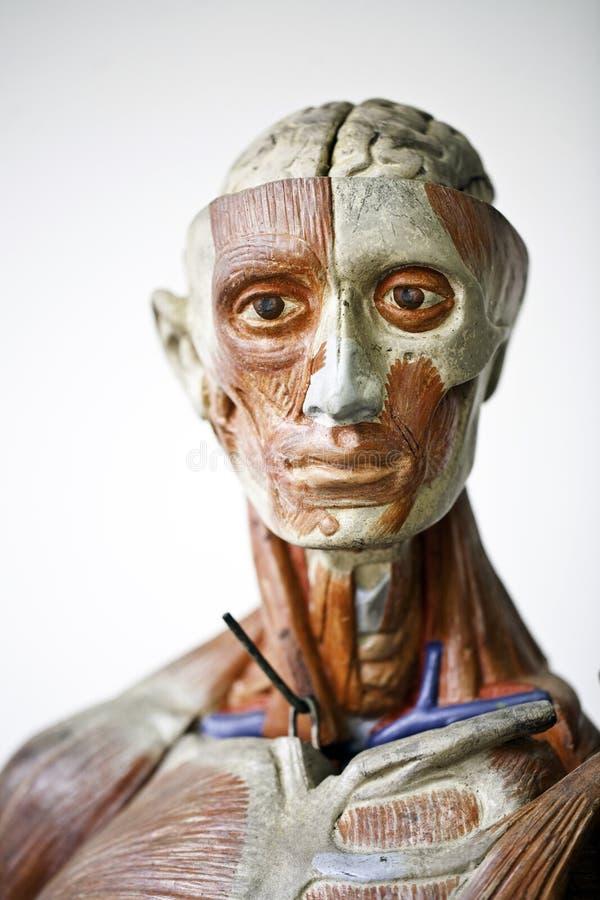 Anatomía del ser humano de Grunge foto de archivo