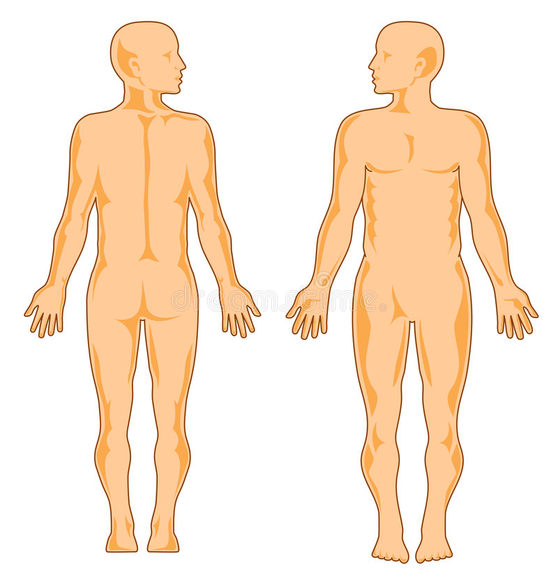 Anatomía humana ilustración del vector. Ilustración de cara - 4802445