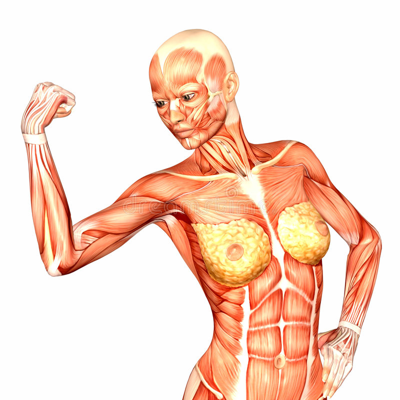 Vistoso Anatomía Carrocería Mujer Molde - Anatomía de Las ...