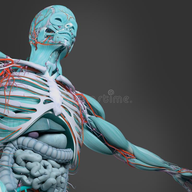Excepcional Anatomía Arte Ilustración - Imágenes de Anatomía Humana ...