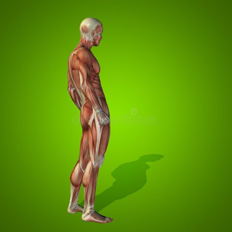Anatomía Humana Conceptual De La Salud Del Hombre 3D Stock de ...