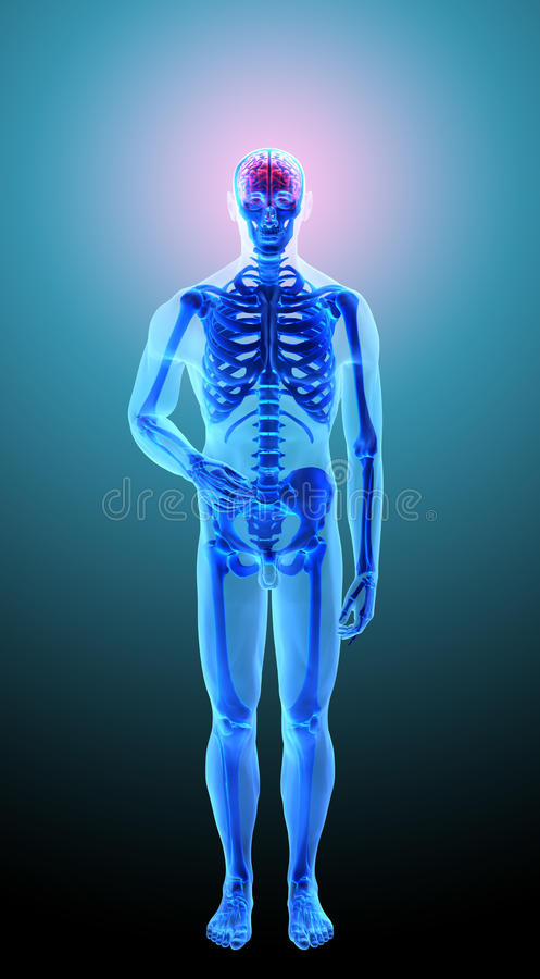 Anatomía humana - dolor de cabeza stock de ilustración