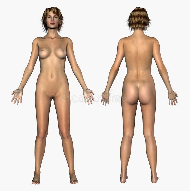 Download Anatomía Humana - Hembra Desnuda - Frente Y Parte Posterior Stock de ilustración - Ilustración de nude, biología: 186614