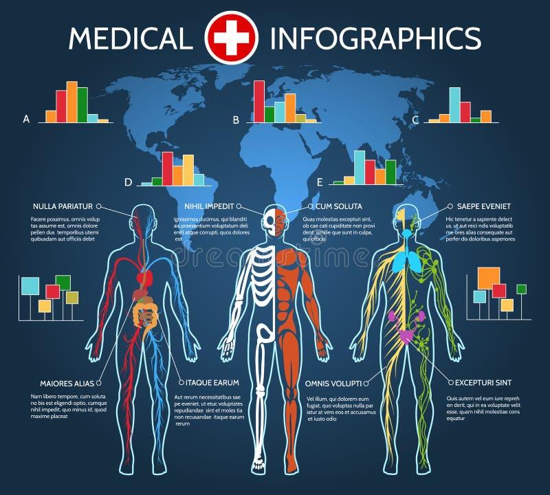 Anatomía Infographic del cuerpo humano libre illustration