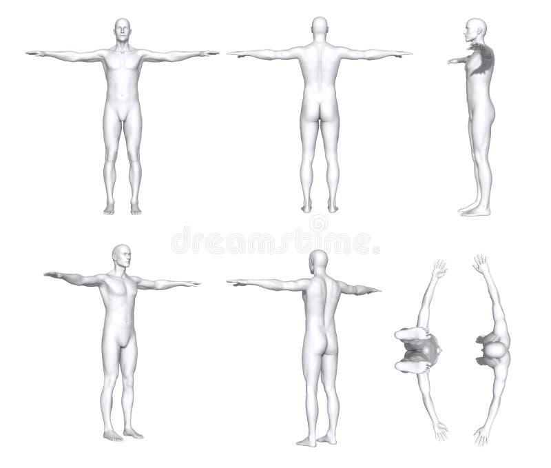 Anatomía masculina fotos de archivo