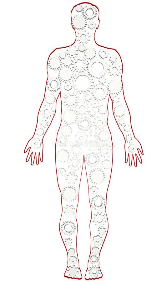 Excelente Anatomía Del Cuerpo Humano Masculino Motivo - Imágenes de ...