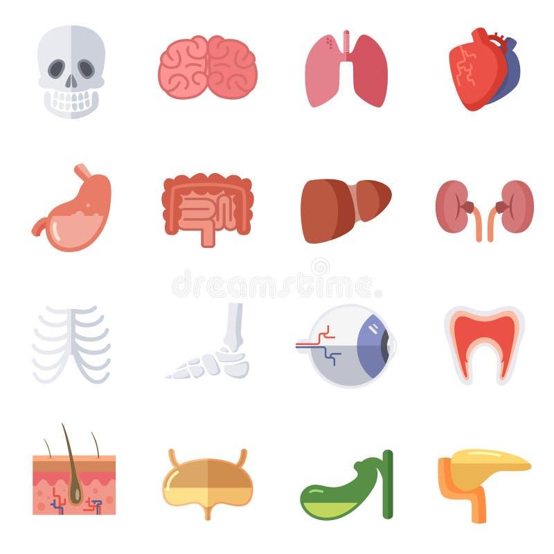 Anatomía Masculina Y Femenina Sistema Del Ejemplo Del Vector De ...