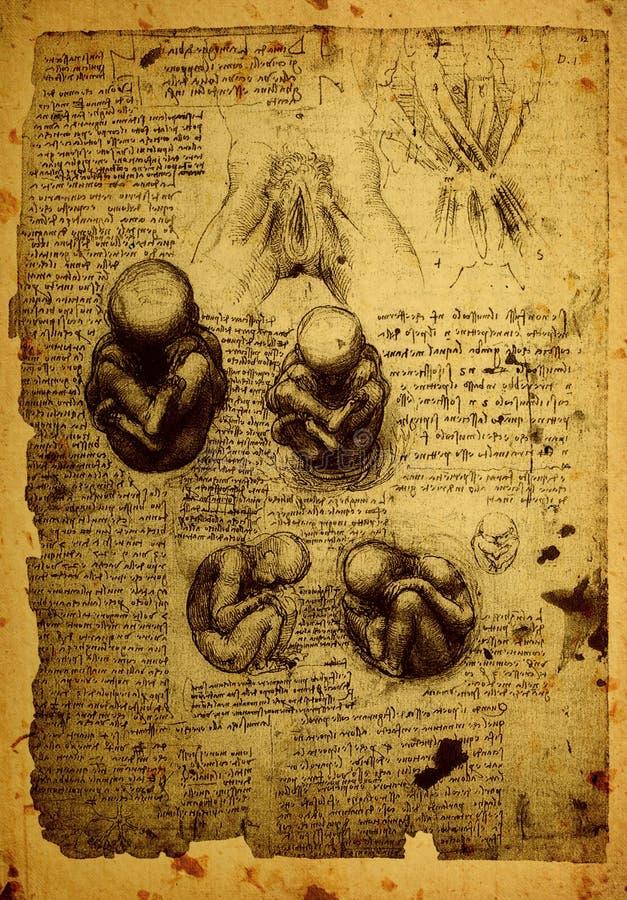 Anatomi royaltyfri illustrationer