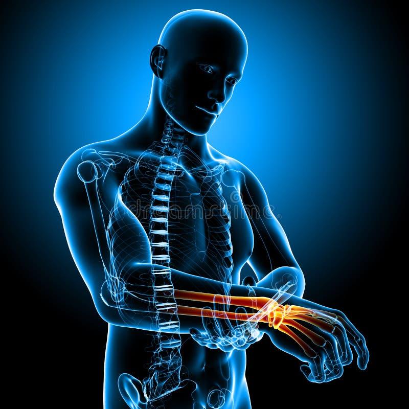 Anatomi av den manliga handleden smärtar stock illustrationer