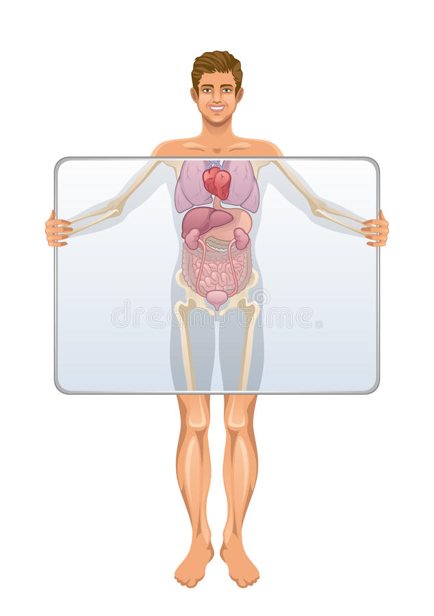 Anatomi av människokroppen stock illustrationer
