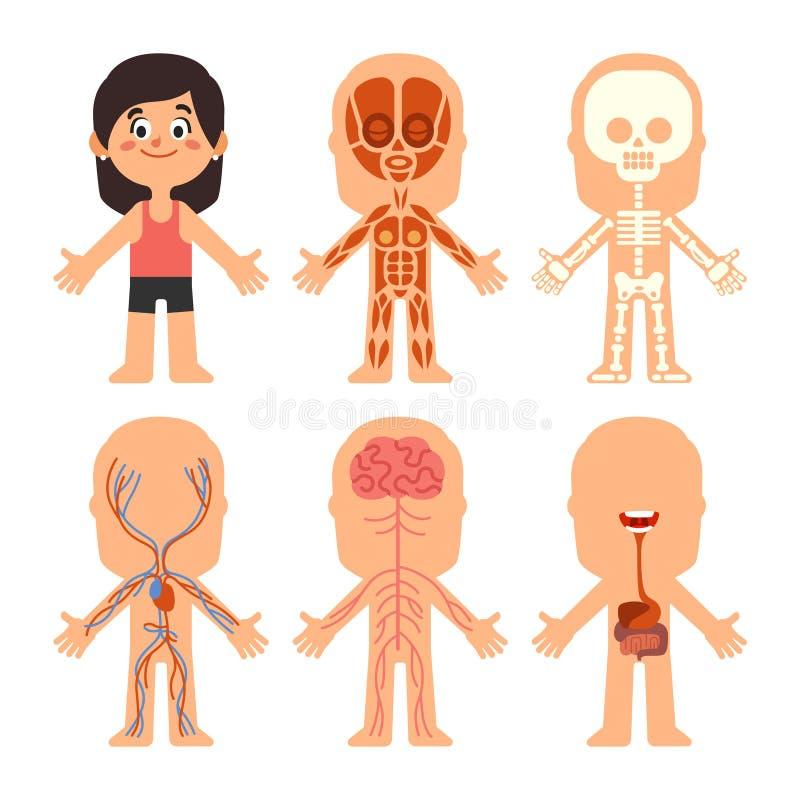 Anatomi för tecknad filmflickakropp Kvinnaåder, organ och nervsystembiologi kartlägger Mänskliga skelett- och muskelsystem royaltyfri illustrationer